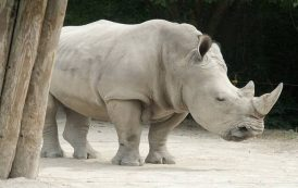 كواليس أزمة خرتيت حديقة حيوان الجيزة بعد قرار وزير الزراعة