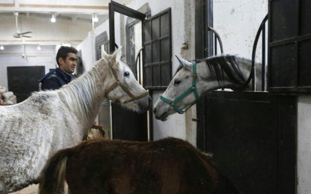 تقرير عربي: الحرب السورية تسببت في فقد 3 الآلف حصان عربي