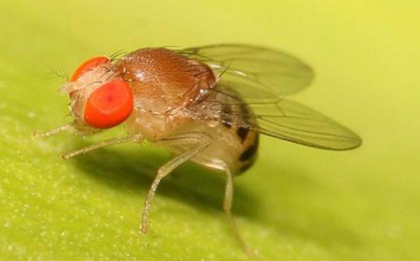 عاجل... وزير الزراعة يعيد تشكيل اللجنة التنسيقية لمكافحة ذبابة الفاكهة لحماية إنتاج المحاصيل البستانية