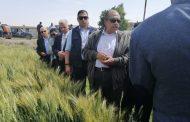 وزير الزراعة : تأثير الصدأ الأصفر يقتصر علي الزراعات المتأخرة للقمح