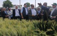 وزير الزراعة : انتاج مصر من القمح سيتخطي حاجز الـ ٩ ملايين طن