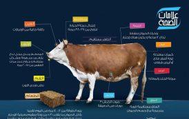بالصور...كيف تتعرف علي صحة حيوانات مزرعتك؟