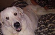 قصة كلب...أنقذ أسرة من الموت وفاءا لجميل سابق فكانت النهاية