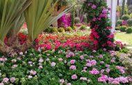 صالون معرض الزهور: المستثمرون يطالبون ببورصة لنباتات الزينة لزيادة الصادرات إلى مليار دولار