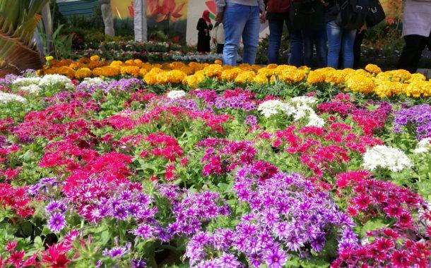 135 شركة تقدمت لحجز مساحات داخل معرض زهور الربيع بحديقة الاورمان