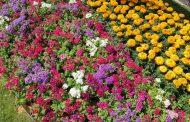 إنفراد...تفاصيل أول تقرير حول مشاكل إنتاج الزهور في مصر