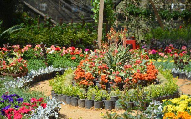 الزراعة تحدد عدد للعارضين المشاركين في معرض زهور الربيع