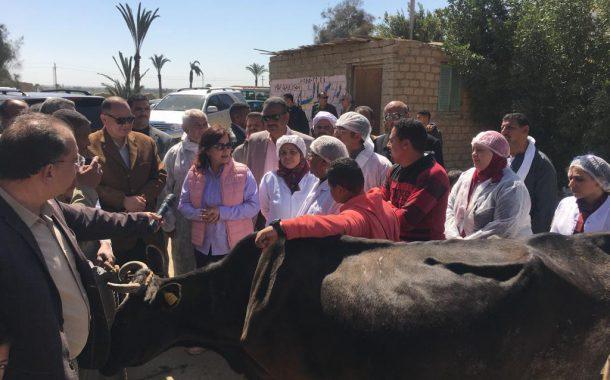 نائب وزير الزراعة ومحافظ الفيوم يتفقدان حملات التحصين ضد مرض الحمي القلاعية