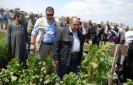 وزير الزراعة يقرر رفع الحد الأدني لأجور العمالة المؤقتة في انتاج التقاوي
