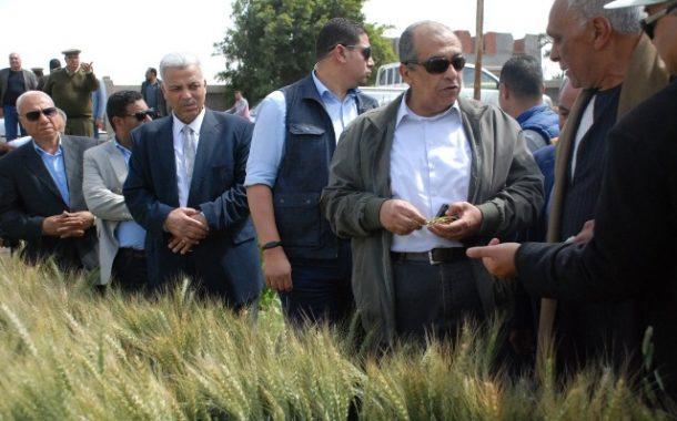 وزير الزراعة لمزارعى القمح: الاصابات بالصدأ الأصفر محدودة وجاءت في مراحل متأخرة ولم تؤثر علي الانتاجية