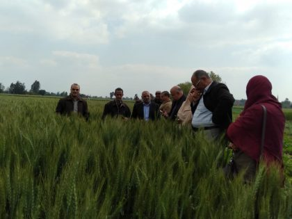 الزراعة تطمئن على الحالة المرضية لمحصول القمح بمحافظة الشرقية