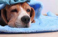تعرف علي إنفلونزا الكلاب...نفوق 40% من القطط بسبب الفيروس