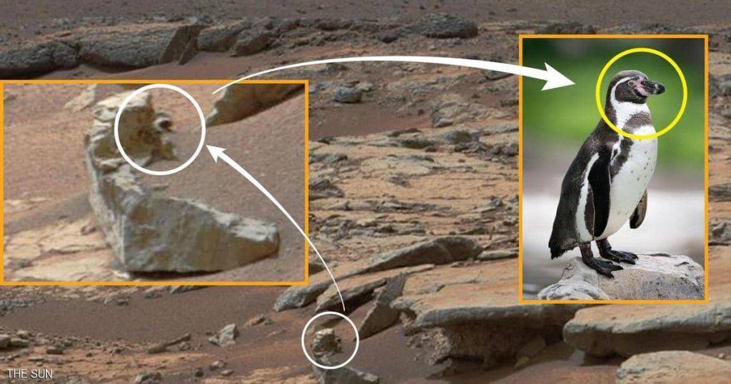 نكشف حقيقة إكتشاف حيوان «البطريق» على سطح المريخ