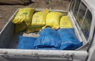لجان وزارة الزراعة تتابع وصول تقاوي الأرز للمزراعين بالأسعار المعتمدة