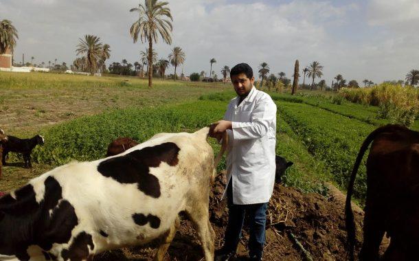 وزير الزراعة: تحصين 400 ألف رأس ماشية ضد الجلد العقدي وجدري الأغنام خلال ثلاثة أيام