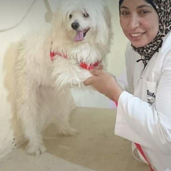 دكتورة سمر عبدالرحمن تكتب: فيروس غامض يهدد القطط في مصر