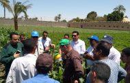مصر تترقب... دورة تدريبية لمواجهة دودة تصيب 80 محصولا زراعيا