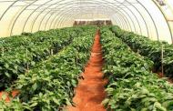 معلومات عن التعريفات المستخدمة في الزراعة العضوية