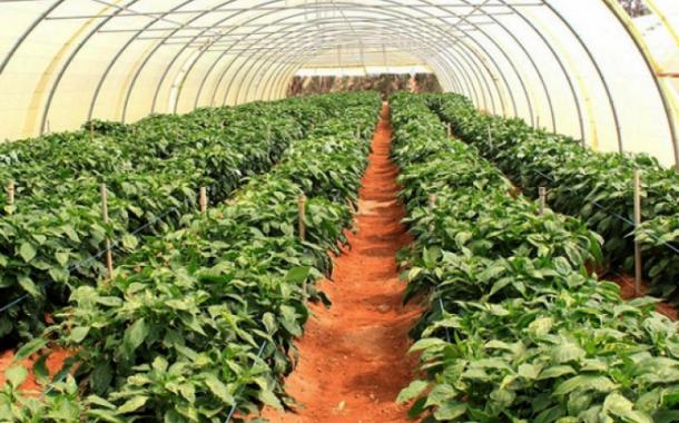 مشروع ناجح: 400 متر صوب زراعية تحقق 61 ألف جنيه سنويا (تفاصيل)