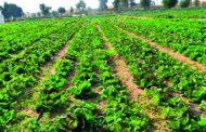 الزراعة تعلن شروط إعتماد المزارع العضوية في مصر (ضوابط التصدير وقواعد التفتيش)