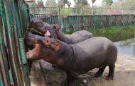 رغم الأمطار... حديقة الحيوان تستقبل 60 زائرا فقط في جمعة المطر