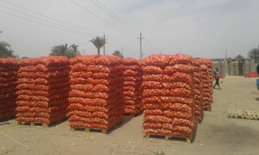 غدا...ازمة البصل المصري علي طاولة إجتماع وزير الزراعة ونظيره السعودي (تفاصيل)