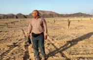 خطة الحكومة لزراعة 4 أصناف من النخيل العربي والمصري في الشلاتين (صور)