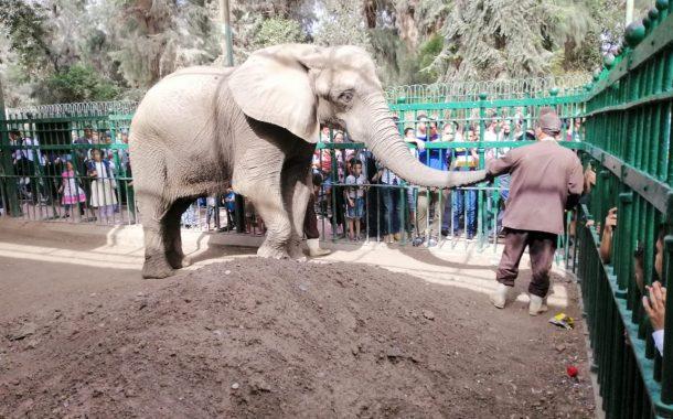 عاجل ...يوم الحزن في حديقة الحيوان ...الفيلة