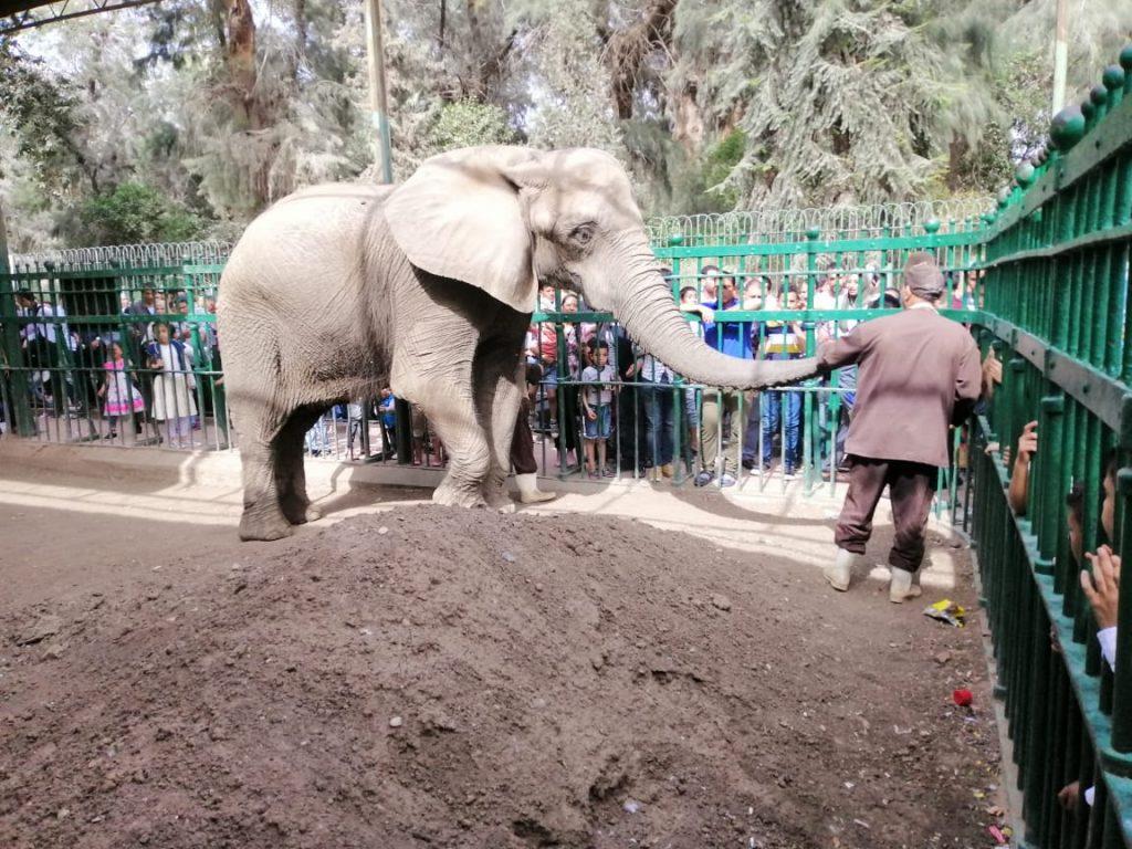 حديقة الحيوان تستقبل 40 ألف زائر ولا تحرشات في اليوم الاول