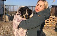 كلب روسي يعود إلي الحياة بعد الدفن في قبر خاص