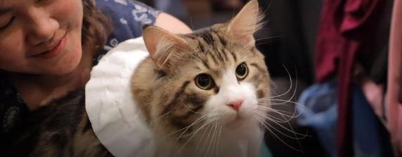 بالفيديو .. شاهد مسابقة ملكة جمال القطط فى مصر