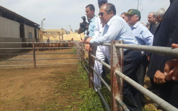 وزير الزراعة: إصدار 33 ألف رخصة تشغيل لمنشأت الإنتاج الحيواني والدواجن لأول مرة