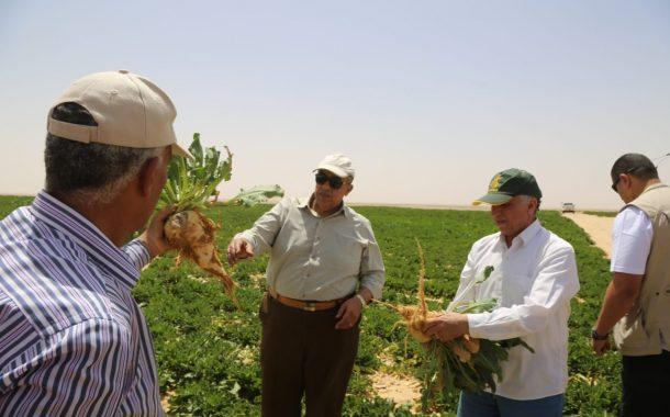 الزراعة: حسم مشاركة شركات السكر في أراضي