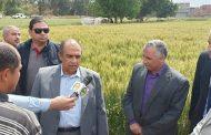 وزير الزراعة : هناك مبالغة غير مبررة حول إصابة القمح بالصدأ الأصفر والمحصول هذا العام مبشر جدا