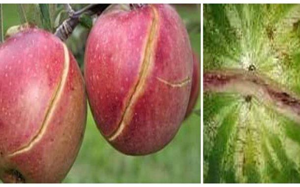 خبير زراعي يفسر أسباب تشقق الرمان والبطيخ والفلفل