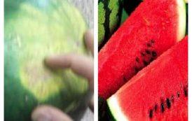 خبير زراعي: 6 مظاهر تدل علي ان البطيخ