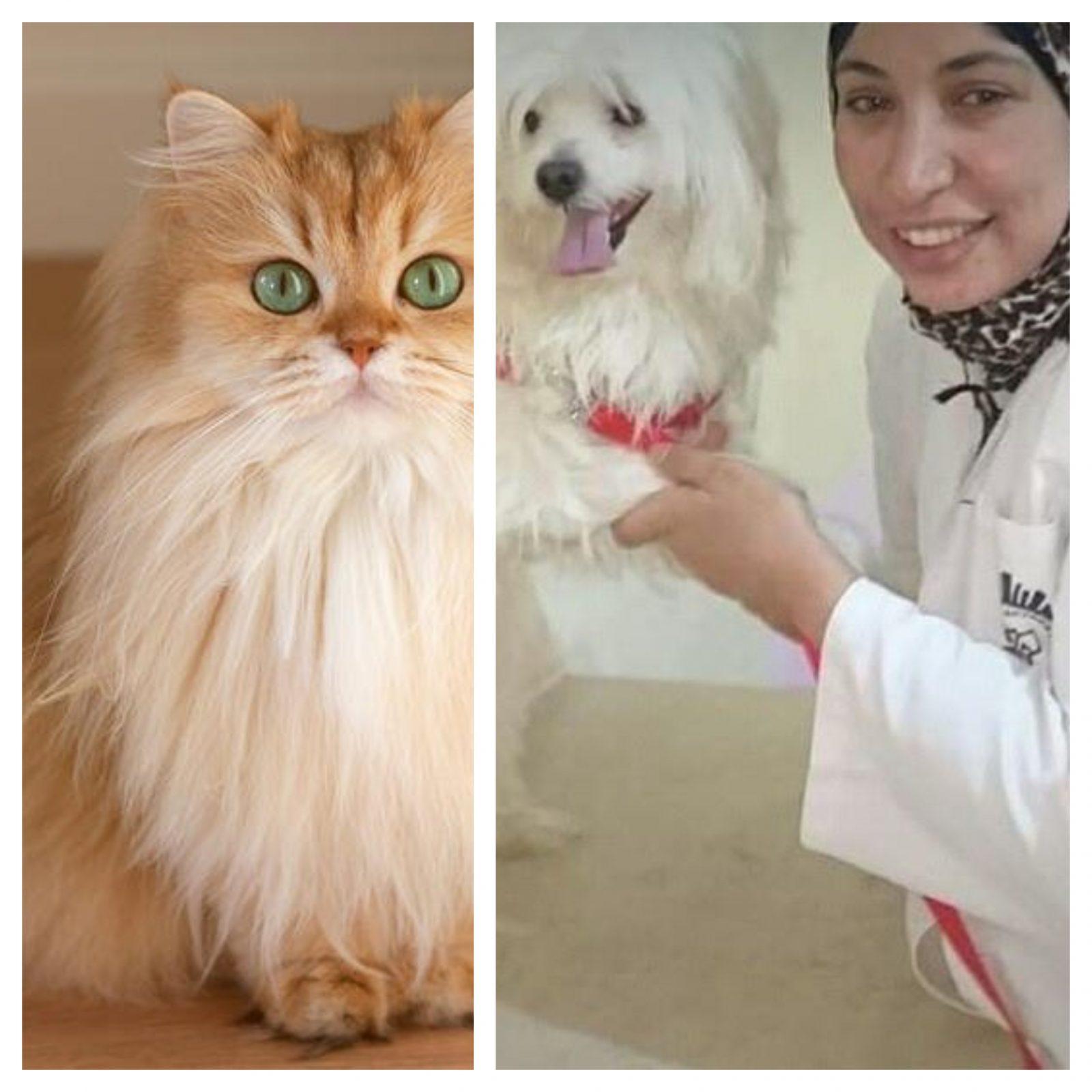 د سمر عبدالرحمن تكتب: كيف تحمي بناتك من مخاطر القطط...نصائح ووقاية