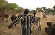 تفاصيل خطة مصر للتعاون في مجال تنمية الثروة الحيوانية بالدول الأفريقية