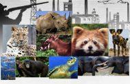 8 ملايين نوع حيواني ونباتي مهدد بالإنقراض علي كوكب الأرض (تقرير دولي)