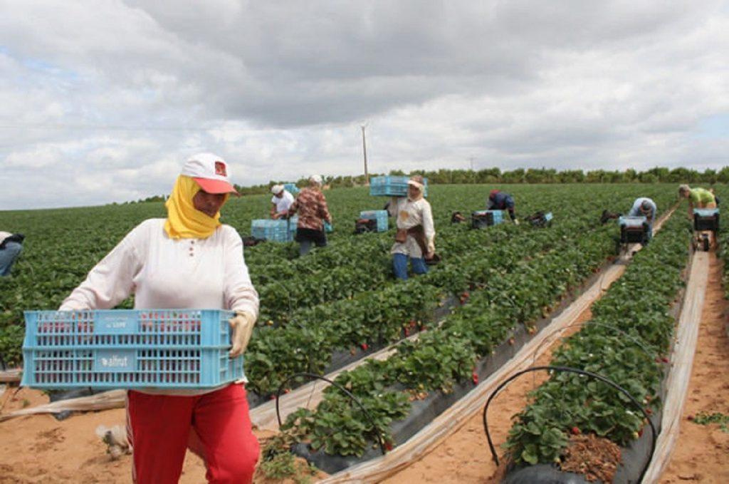 المملكة المتحدة تبرم إتفاقا مع المغرب لزيادة الصادرات الزراعية بعد الخروج من الإتحاد الاوروبي