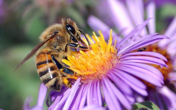 أخطر تقرير دولي عن النحل: تراجعه يهدد الأمن الغذائي في العالم (13 معلومة)