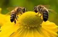 10 حقائق مذهلة حول نوم النحل وتوقيته وكيف يختار موعد النوم