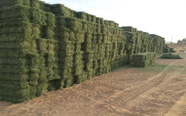 الزراعة توافق علي تصدير 152 ألف كيلو تقاوي لمحاصيل أعلاف وريحان