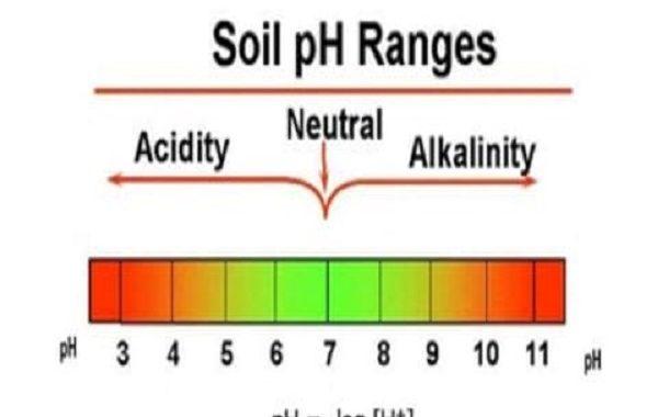 خبير أردني يوضح تأثير درجات الحموضة في التربة على إمتصاص العناصر الغذائية