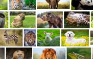 كنز المعلومات...ما لا تعرفه عن الحيوانات:حقائق صادمة