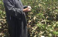 نقيب الفلاحين الصين نجحت في زراعة القطن علي سطح القمر وزراعته تنقرض في مصر