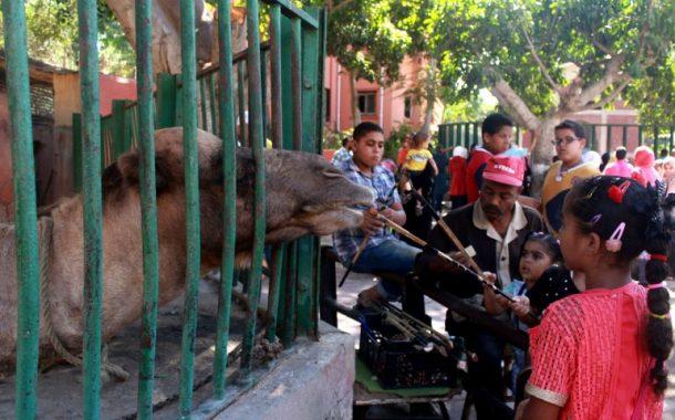 تعرف علي خطة تطوير حدائق الحيوان...و7 مليون جنيه لحديقة الإسكندرية