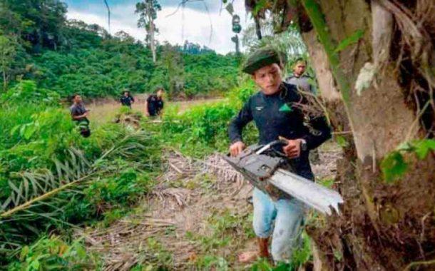 أغلي شجرة في العالم... 100 ألف دولار للكيلو الواحد