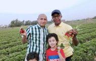 ممثل جمعية GIZ يتفقد مزارع الفراولة في القليوبية... ومهدي: نستهدف نقل الخبرات للدول الأفريقية (صور)