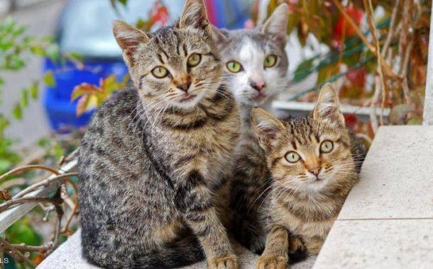أول مسابقة لجمال القطط بمدينة طنطا